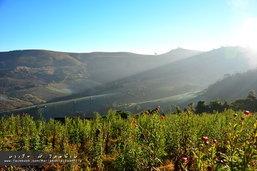 เส้นทางแห่งรักขับทะลุเมฆไปกอดดอยสีชมพูที่ภูทับเบิก ภูหินร่องกล้า ภูลมโล เขาค้อ ตอนที่ 3