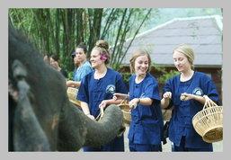 Thai Elephant Home: ท่องเที่ยวเชิงอนุรักษ์กับช้างน้อยสุดน่ารักที่เชียงใหม่
