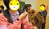 พาเที่ยวคาเฟ่นกฮูกสุดน่ารัก Owl Family Hakata ที่ Fukuoka
