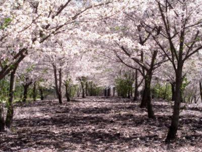 ทุนการศึกษาระดับปริญญาโท คัดเรียนประเทศญี่ปุ่น