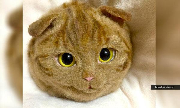 """""""กระเป๋าแมว"""" แฟชั่นแนวน่ารักของสาวญี่ปุ่น"""