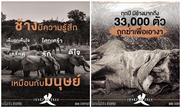 คนดังกว่าร้อย ปลุกกระแส #ไม่เอางาไม่ฆ่าช้าง ชวนละเลิกงาช้าง