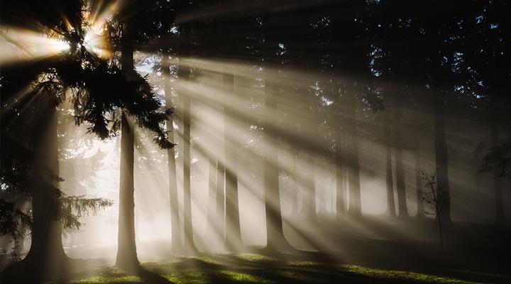 """ชินรินโยกุ ศาสตร์การ """"อาบป่า"""" หนทางเยียวยาจิตวิญญาณตามแบบฉบับคนญี่ปุ่น"""
