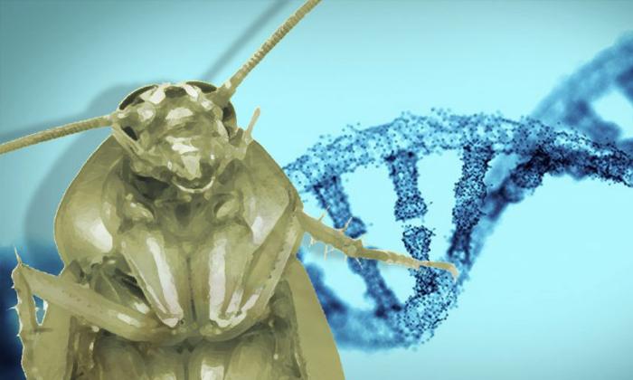 """""""ยีน"""" คือสาเหตุว่าทำไมแมลงสาบถึงตายยากตายเย็น"""