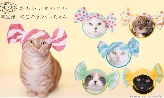 มาสวมมงให้น้องแมวกับ Accessory สวมหัวสุดน่ารักลายใหม่ในธีม Sweet Candy