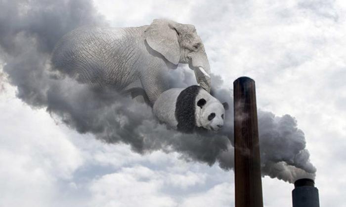 """สายพันธุ์สัตว์เกือบครึ่งเสี่ยงสูญพันธุ์ภายใน 60 ปี เพราะ """"โลกร้อน"""""""