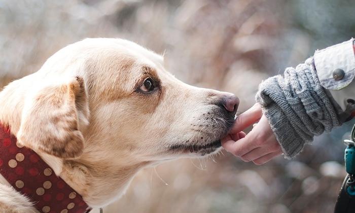 เปลี่ยนพฤติกรรมซนป่วนของน้องหมา ด้วยวิธีง่ายๆ