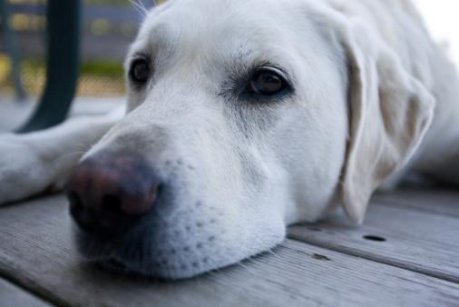 สุนัขรักเจ้าของจริงหรือ