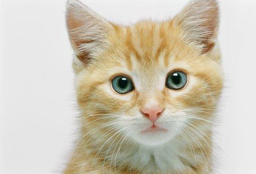 ทำไมแมวถึงเกลียดน้ำ