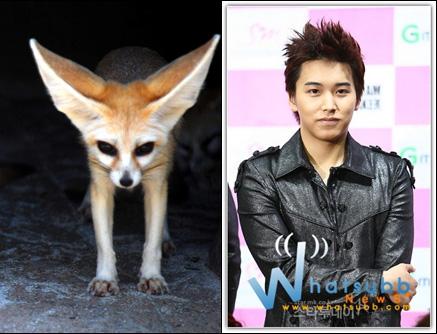 15 อันดับ ดารานักร้องเกาหลีที่คล้ายสัตว์