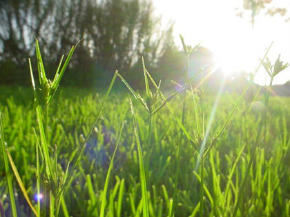 ความรัก กับ ต้นหญ้า...
