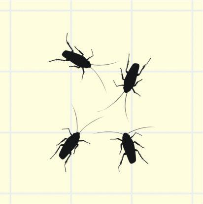 บอกรัก...ด้วยแมลงสาบ