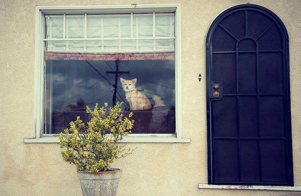 ภาพถ่ายสัตว์เลี้ยงแสนน่ารัก ณ ริมหน้าต่าง