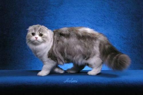 10 อันดับ พันธุ์แมวที่สวยที่สุด