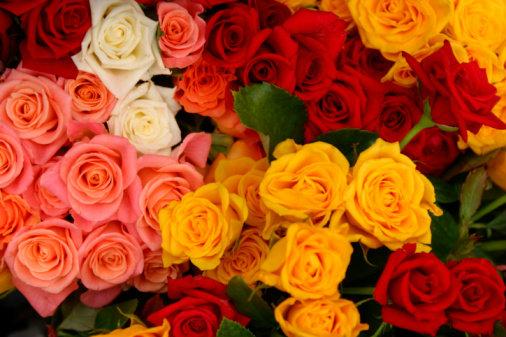 ความหมายของดอกกุหลาบ สีต่างๆ