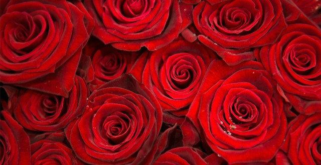 10 อันดับ ดอกไม้ที่สื่อความหมายถึงคำว่ารัก