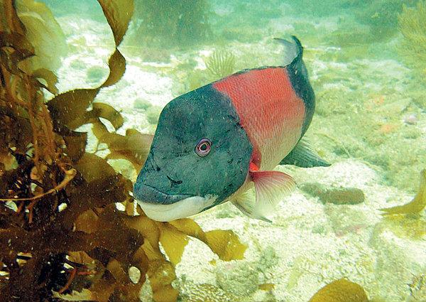 ปลา ′เปลี่ยนเพศ′ เพื่อสิ่งแวดล้อม