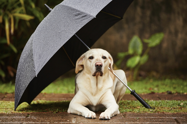 การดูแลสัตว์เลี้ยงในหน้าฝน