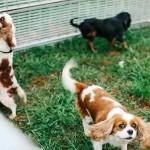 ปฏิบัติการช่วยชีวิตน้องหมา 108 ตัว จากฟาร์มเพาะ
