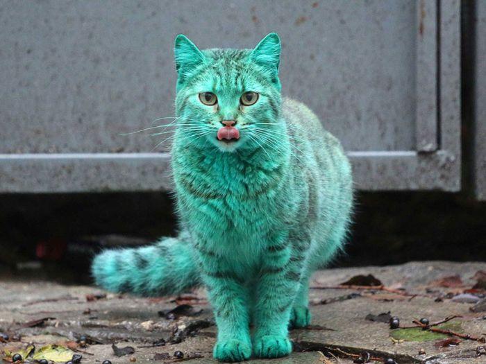 แปลกแต่จริง แมวเรืองแสงสีเขียว นึกว่าเป็นอวาตาร์
