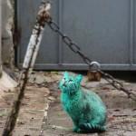 แปลกแต่จริง แมวเรืองแสงสีเขียว นึกว่าเป็นอวาตาร์ (5)