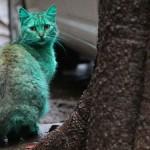 แปลกแต่จริง แมวเรืองแสงสีเขียว นึกว่าเป็นอวาตาร์ (8)
