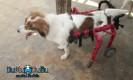 นิกกี้ ณัฐณิชา ชวนไปทำบุญที่บ้านกัญญาภัทรเพื่อหมาและแมวถูกทอดทิ้ง (อ�