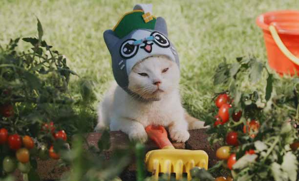 คลิปน้องหมาน้องแมวน่ารักๆ จากโฆษณาเกมญี่ปุ่น