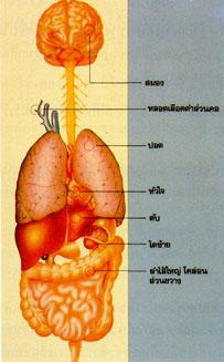 โรคตับอักเสบจากเชื้อไวรัส