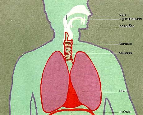 โรคระบบการหายใจ