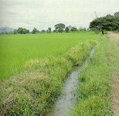 การพัฒนาแหล่งน้ำเพื่อการเกษตร