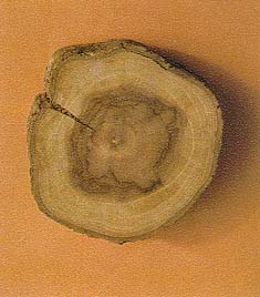 โครงสร้างของเนื้อไม้