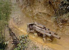 การขนส่งไม้ด้วยรถแทรกเตอร์และรถยนต์
