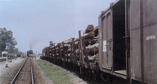 การขนส่งไม้โดยทางรถไฟ