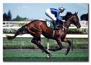 ประวัติกีฬาขี่ม้า