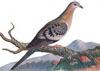 มาธาร์ นกพิราบนักเดินทาง ตัวสุดท้ายของโลกเสียชีวิต