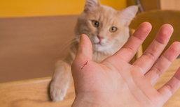 """แผลแมวข่วนอย่าชะล่าใจ เสี่ยง """"เนื้อเน่า"""" ลุกลามเร็ว"""