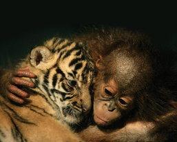 ภาพความรัก แม้ต่างเผ่าพันธุ์