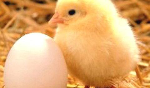 เฉลยปัญหาโลกแตกไก่,ไข่อะไรเกิดก่อน?