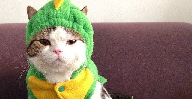 ทาสแมวเศร้า! เพจทูนหัวของบ่าวปิดตัว