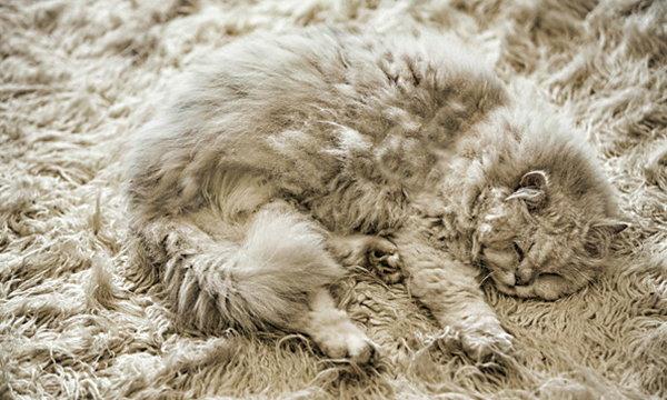 """เมื่อ """"แมว"""" กลายเป็นนินจา ภาพที่ได้เลยเป็นแบบนี้"""