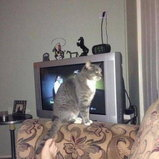 รวมรูปแมวฮาๆ ในโลกอินเตอร์เน็ต