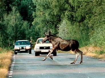 สัตว์วิ่งตัดหน้ารถ