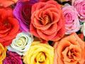 ดอกไม้, กุหลาบ