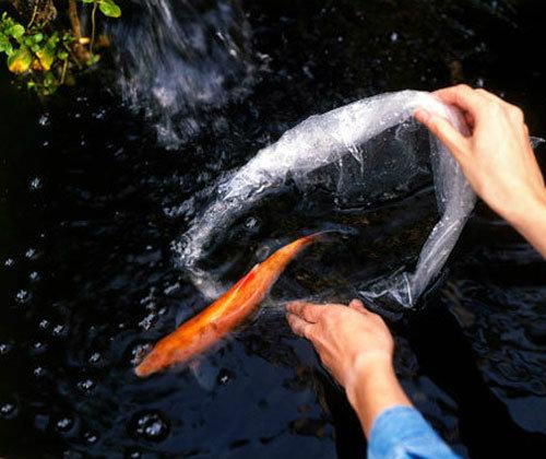 ปล่อยปลาได้บุญเสริมดวง