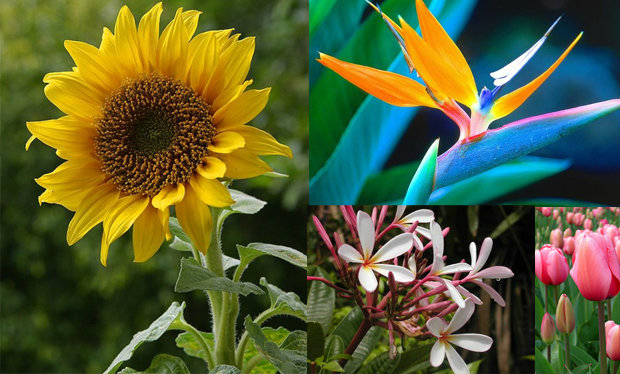 ทำนายชะตาชีวิตแบบชัดๆ จากดอกไม้ประจำราศีเกิด
