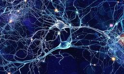 ไปนอนกัน! อดนอนมากไป ระวังเซลล์สมองจะเล่นงานตัวเอง