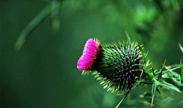 แบกกล้องยลโฉมดอกไม้