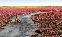 สวย ซึ้ง อลังการ งานวิวาห์ล้านบัวชมบัวล้านดอก เมืองอุดรธานี