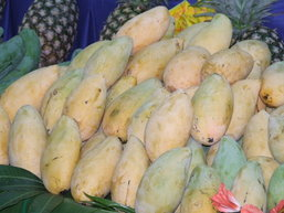 ขอเชิญเที่ยวงานวันมะม่วงและของดีอะเมซิ่งอำเภอปากท่อ จ.ราชบุรี